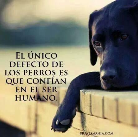LOS PERROS CONF�AN EN EL SER HUMANO