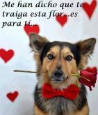 Ésta flor es para ti