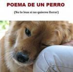 Poema de un perro