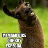 Mi mami dice que soy especial